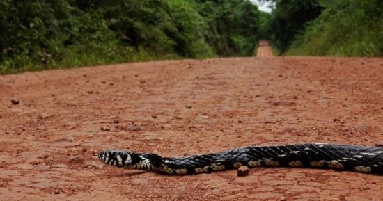 serpiente, fauna, misiones, rutas